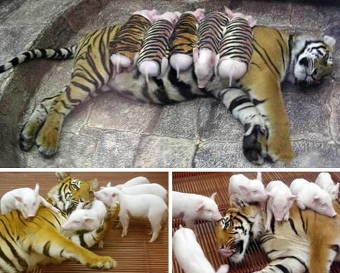 14 amizades animais incomuns que poderiam derreter o coração de qualquer pessoa 6