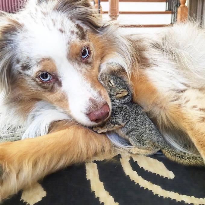 14 amizades animais incomuns que poderiam derreter o coração de qualquer pessoa 9