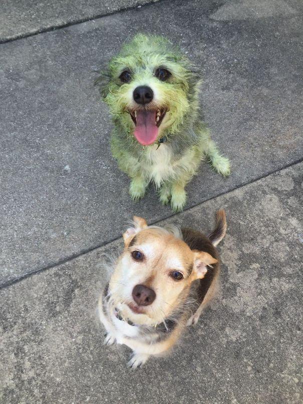 25 cachorros idiotas que vão te atacar 3