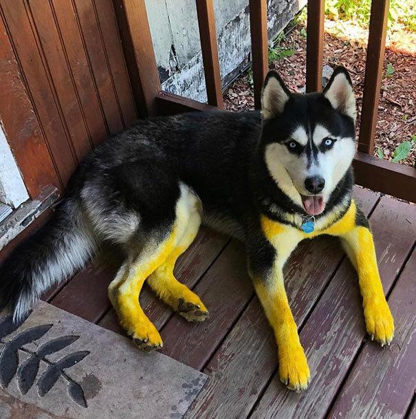 25 cachorros idiotas que vão te atacar 12
