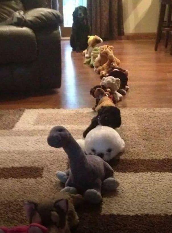 25 cachorros idiotas que vão te atacar 16