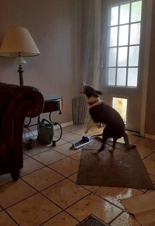 25 cachorros idiotas que vão te atacar 23