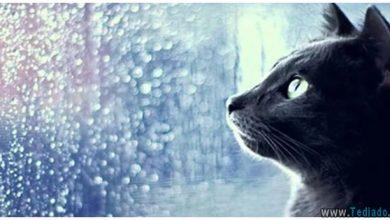 gatos - gatos espiritos e energias negativas 390x220 - Os gatos são grandes protetores da casa contra espíritos e energias negativas?