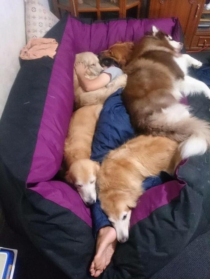 Todo mundo já ouviu falar que os cães são o melhor amigo do homem (20 fotos) 5