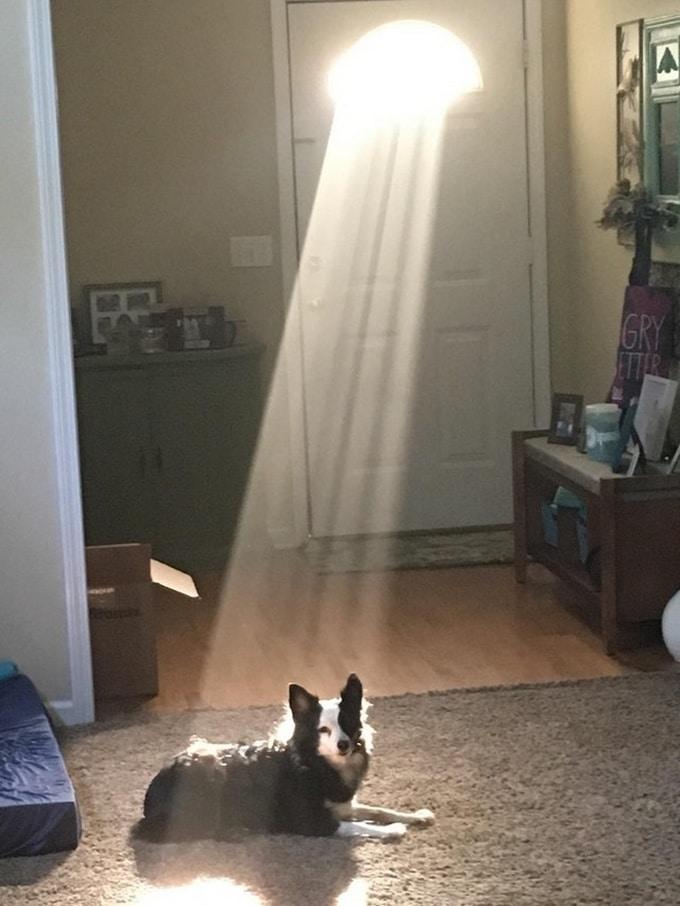 Todo mundo já ouviu falar que os cães são o melhor amigo do homem (20 fotos) 8