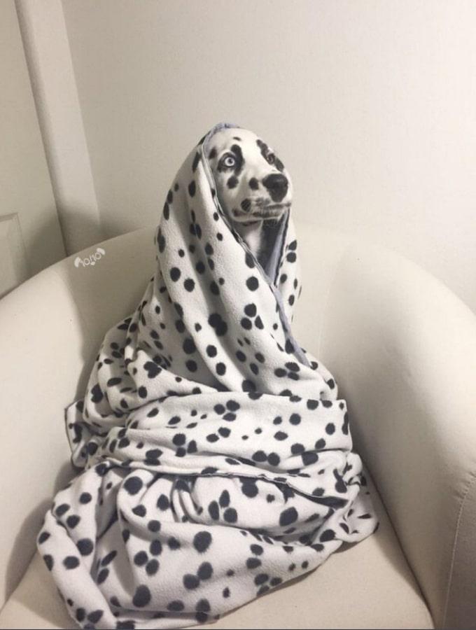 Todo mundo já ouviu falar que os cães são o melhor amigo do homem (20 fotos) 10