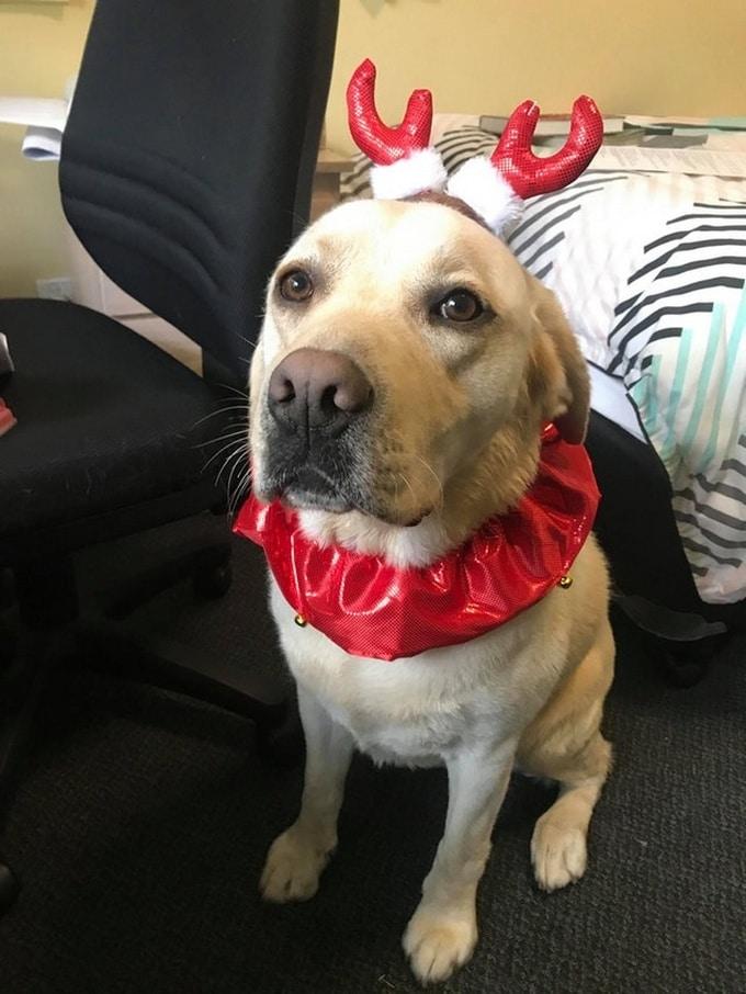 Todo mundo já ouviu falar que os cães são o melhor amigo do homem (20 fotos) 11
