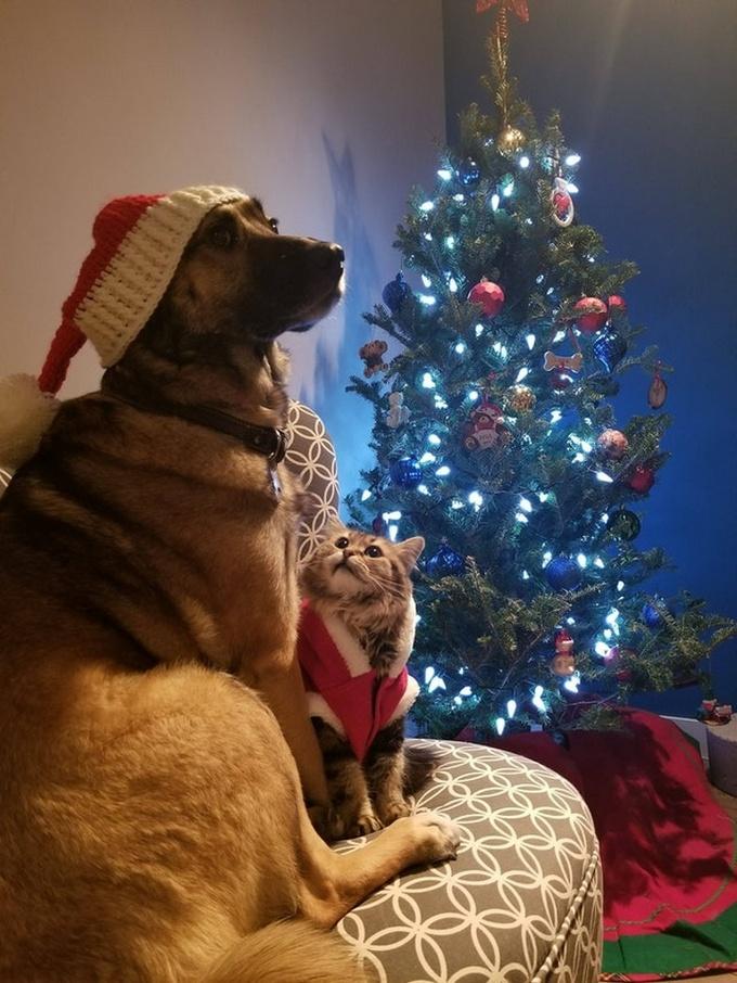 Todo mundo já ouviu falar que os cães são o melhor amigo do homem (20 fotos) 12