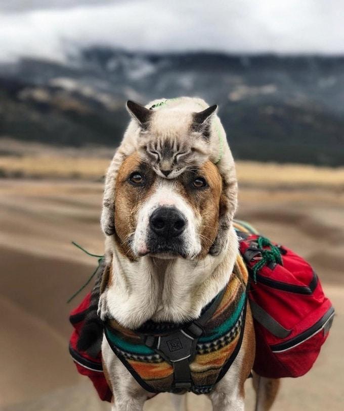 Todo mundo já ouviu falar que os cães são o melhor amigo do homem (20 fotos) 16