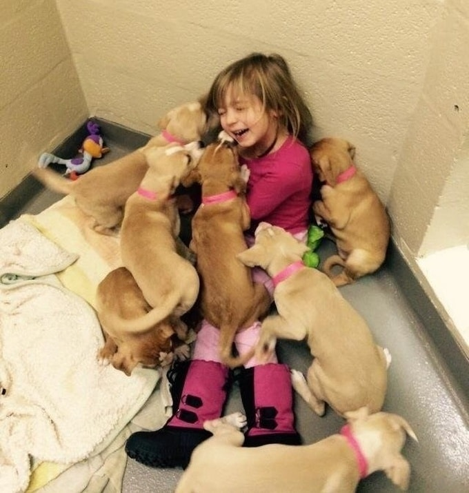 Todo mundo já ouviu falar que os cães são o melhor amigo do homem (20 fotos) 18