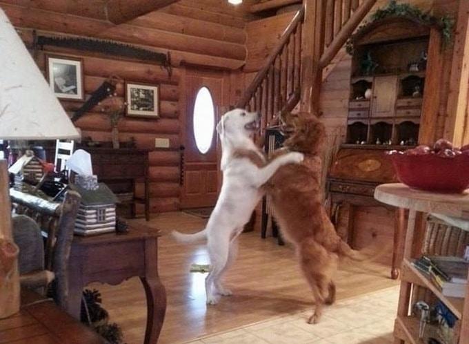 Todo mundo já ouviu falar que os cães são o melhor amigo do homem (20 fotos) 19