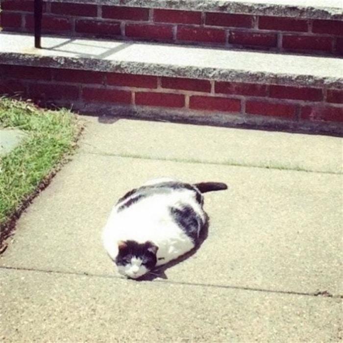 31 fotos provando que os gatos são criaturas hilariantes 5