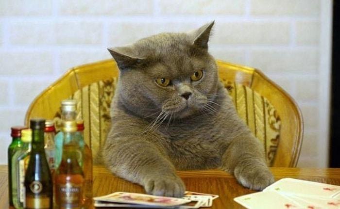 31 fotos provando que os gatos são criaturas hilariantes 7