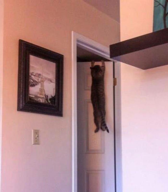 31 fotos provando que os gatos são criaturas hilariantes 8