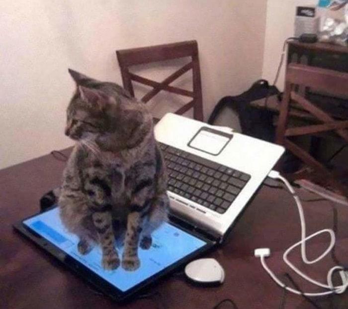 31 fotos provando que os gatos são criaturas hilariantes 11