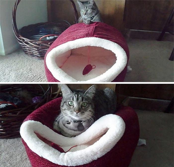 31 fotos provando que os gatos são criaturas hilariantes 14