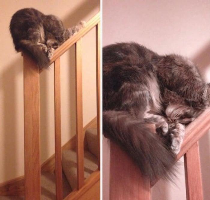 31 fotos provando que os gatos são criaturas hilariantes 21