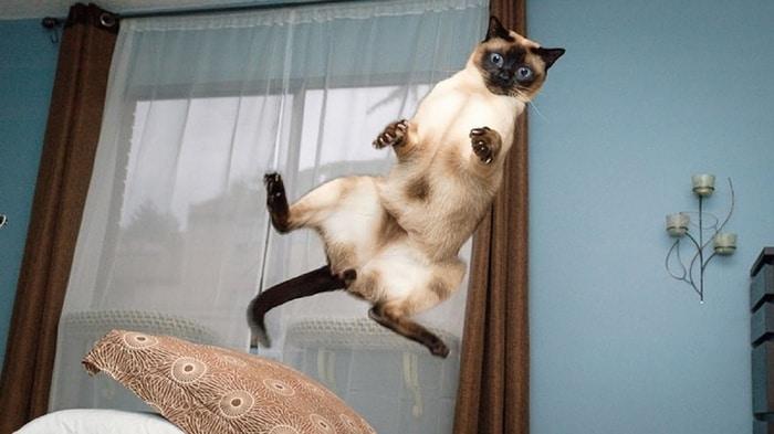 31 fotos provando que os gatos são criaturas hilariantes 26