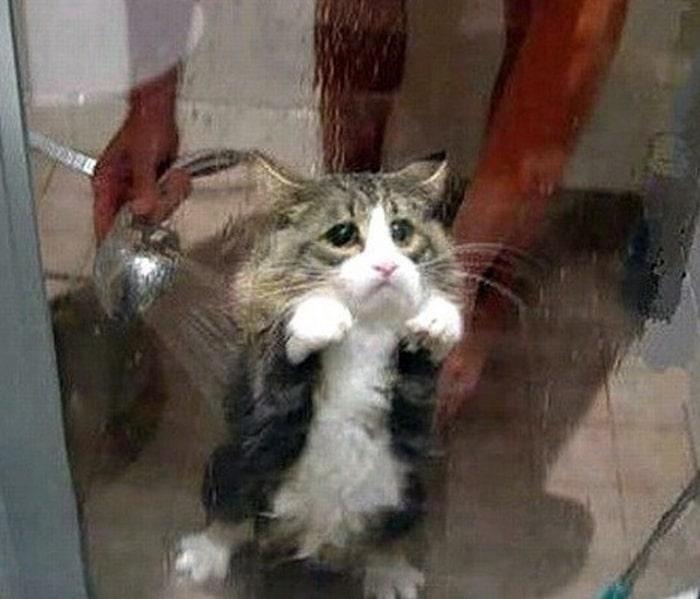 31 fotos provando que os gatos são criaturas hilariantes 27