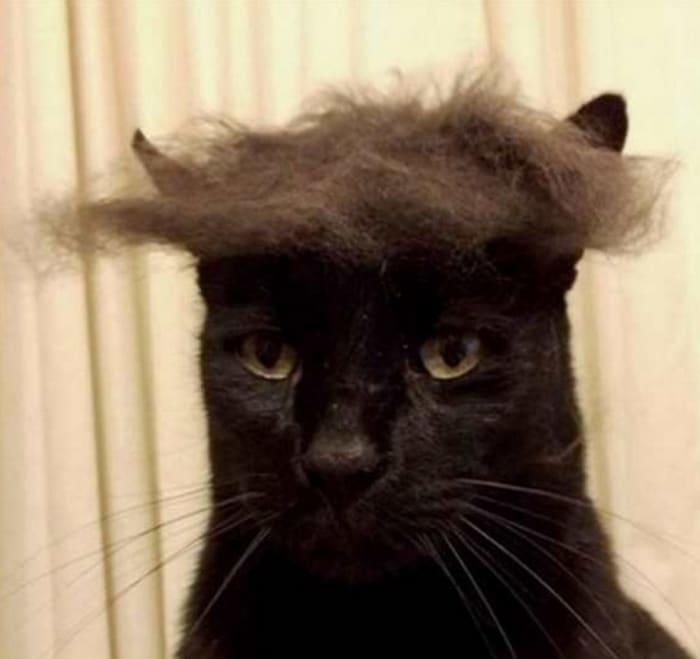 31 fotos provando que os gatos são criaturas hilariantes 30