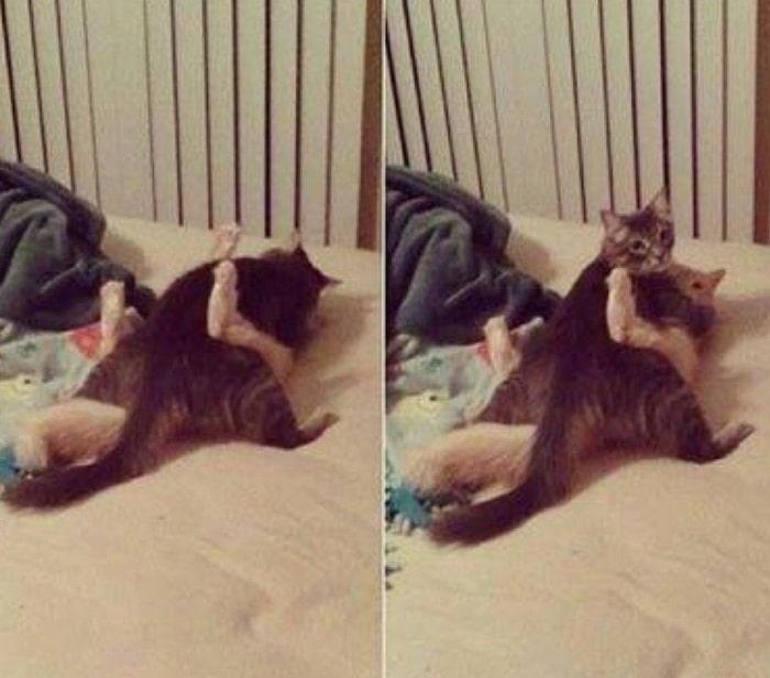 31 fotos provando que os gatos são criaturas hilariantes 31