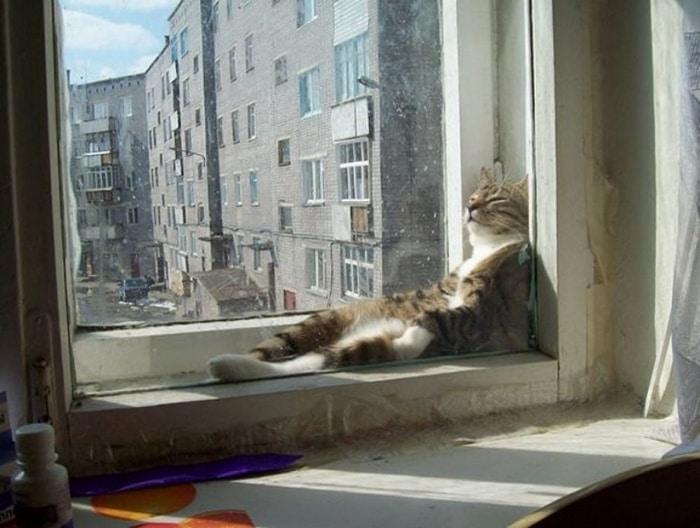 31 fotos provando que os gatos são criaturas hilariantes 32