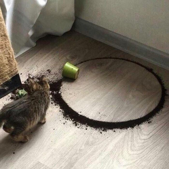 31 fotos provando que os gatos são criaturas hilariantes 33