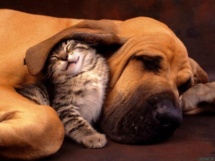 24 motivos para ter um animal de estimação agora mesmo 14