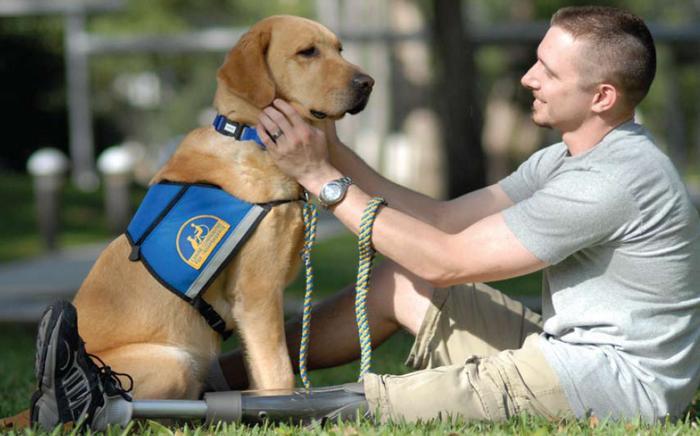 O que fazer se você ver um cão de serviço sem o dono