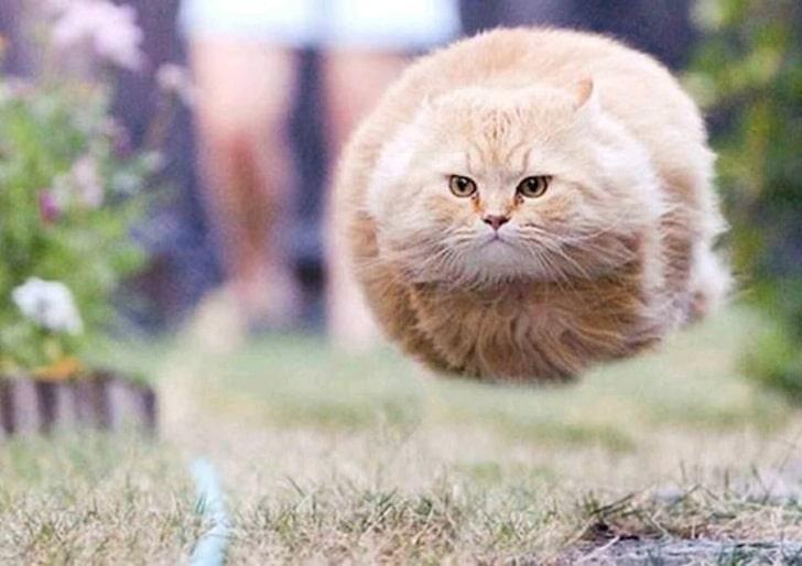 Quando você ouvir seu dono sacudir a sacola de comida: