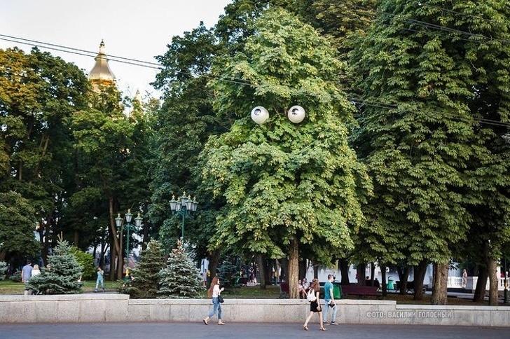 Esta luz da rua parece com os olhos da árvore
