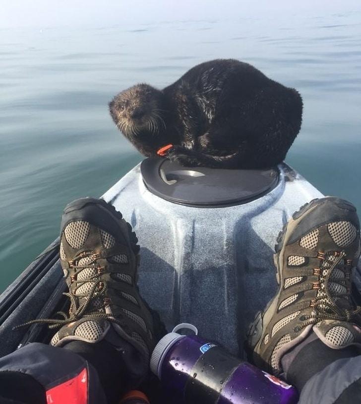 Eu estava saindo no meu paddleboard quando esse cara decidiu que precisava de um descanso