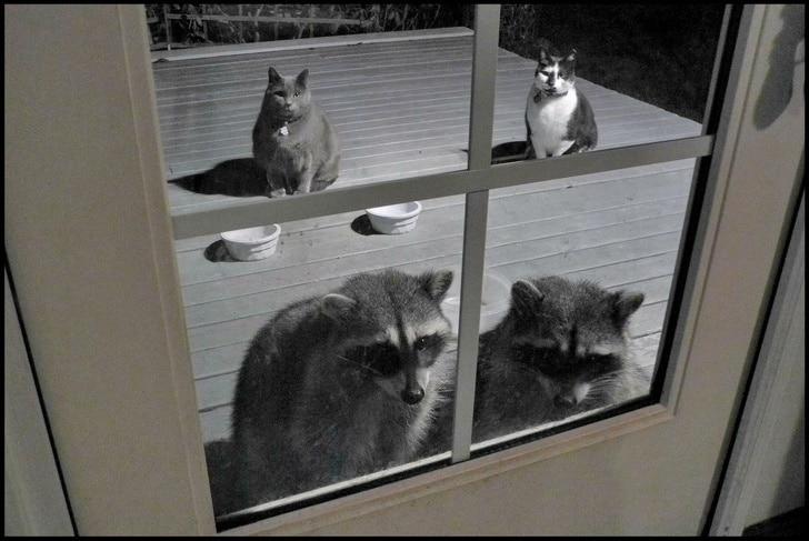 Meus gatos tem amigos novos