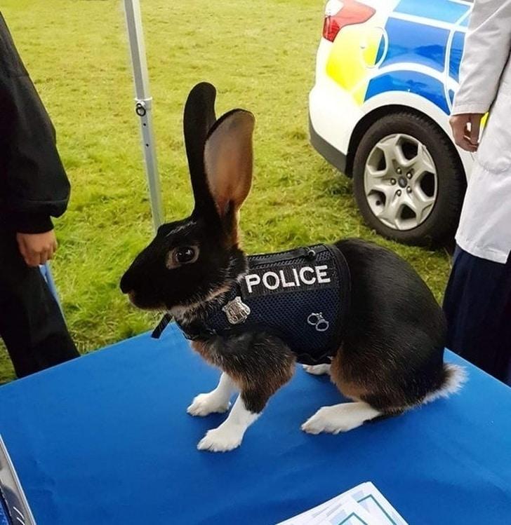 Novo policial na área