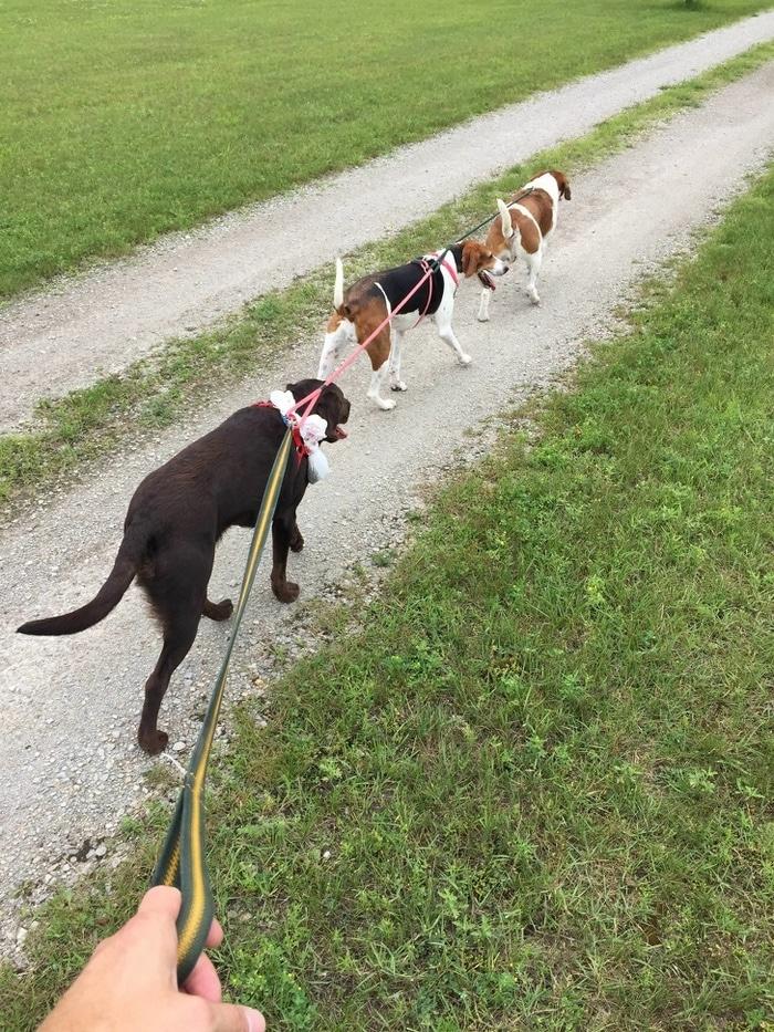 Andar com cães nunca foi tão fácil