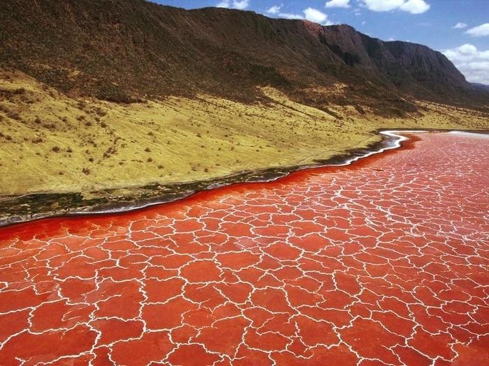 A superfície do Lago Natron na Tanzânia parece um padrão de pele de girafa, não é?