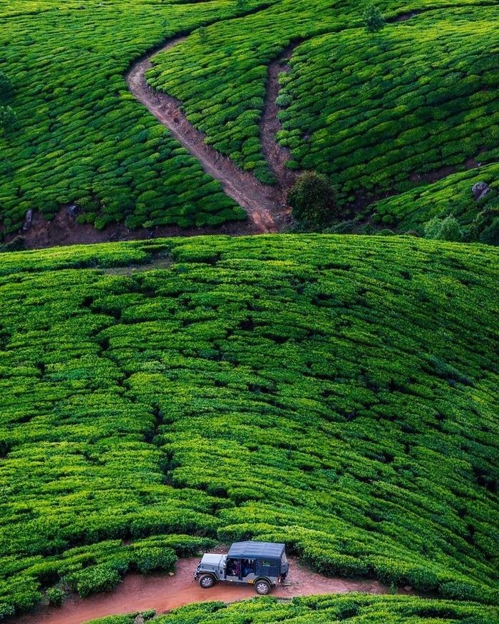 O verde hipnotizante das plantações de chá de Kolukkumalai, Índia