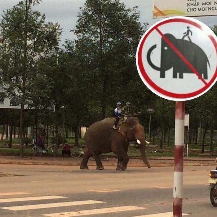 Espere, eles estão sentados no elefante, não é proibido