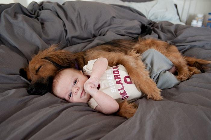 Apena meu cachorro dando um abraço no bebê