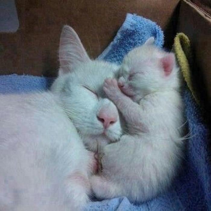 Dormir com a mamãe é melhor coisa do mundo