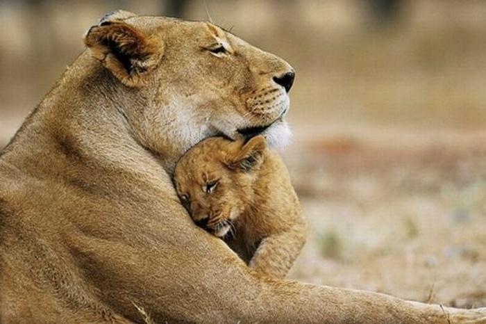 Os abraços da mãe são os melhores