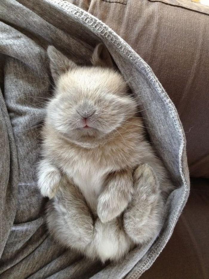 14 animais que dormem tão profundamente que gostaríamos de nos unir a eles 3