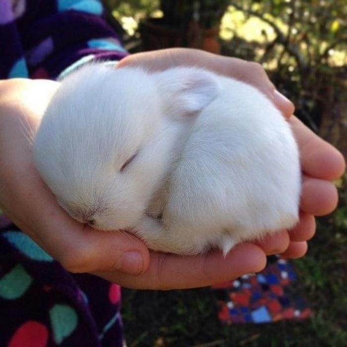 14 animais que dormem tão profundamente que gostaríamos de nos unir a eles 5
