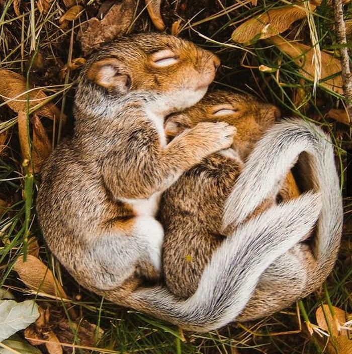 14 animais que dormem tão profundamente que gostaríamos de nos unir a eles 6