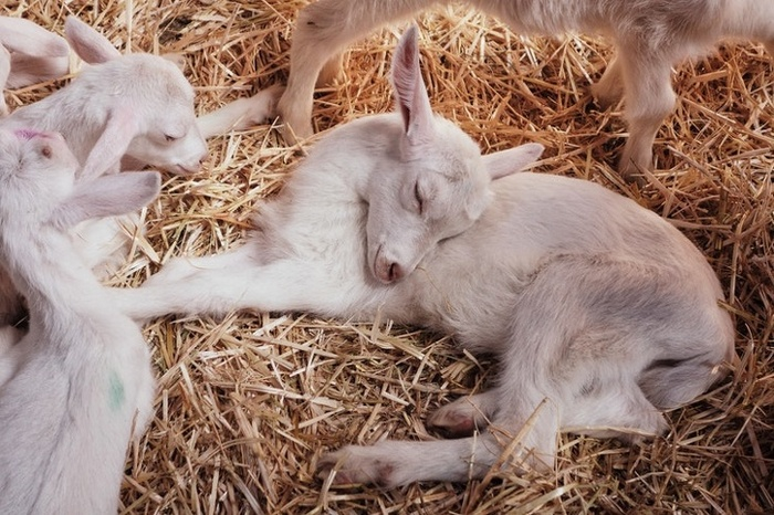 14 animais que dormem tão profundamente que gostaríamos de nos unir a eles 9