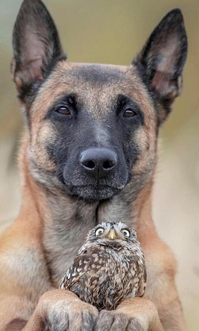 21 animais que simplesmente não conseguem esconder suas emoções 10