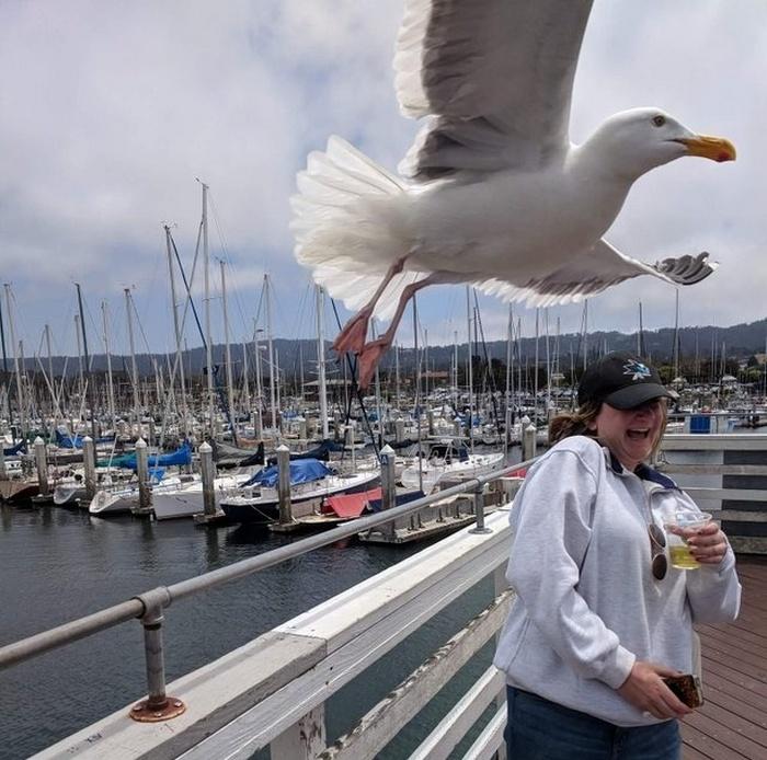 Meu namorado foi tirar uma foto minha, no mesmo momento que a gaivota voou