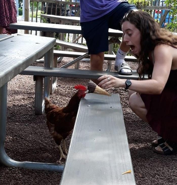 O momento exato em que o frango roubou seu sorvete