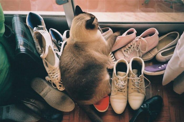 22 fotos provando que os gatos são os verdadeiros donos da casa 6
