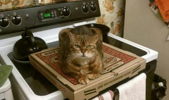 22 fotos provando que os gatos são os verdadeiros donos da casa 9